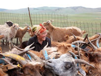 Trans Siberian Tour woman feeding cattle